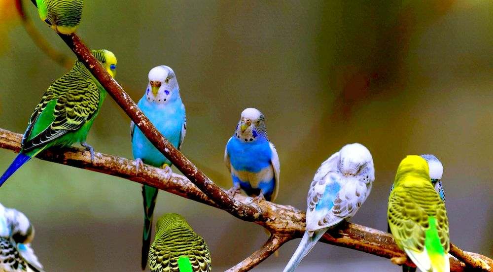 Сколько лет живут различные птицы в том числе вороны и попугаи 55